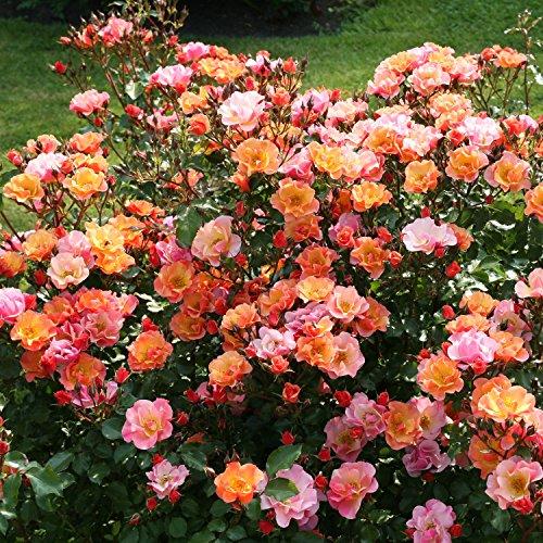 Garten Schlüter 90025