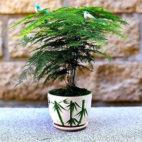 Bonsai plantar las semillas de bambú en maceta del jardín de DIY 30pcs Patio Pot árbol