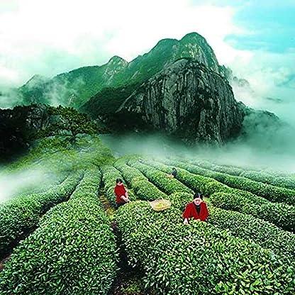Chinesische-Bio-Top-Lapsang-Souchong-Tee-250g-055lb-ohne-Rauch-Wuyi-Roter-Tee-Warmer-Magen-Schwarzer-Tee-senkt-den-Blutdruck-Grne-Nahrung