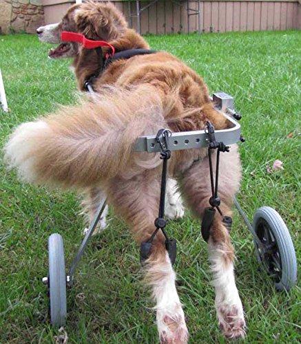 Silla de ruedas ajustable para perro,con altura de la cadera: de 20,32...