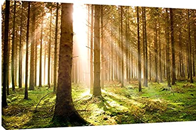 "MOOL ""Autumn Pine Forest"" Canvas Wall Art Print, Green, Large, 32 x 22-Inch"