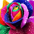 Regenbogen Rose / Einhornrose / Bunte Rose / ca. 50 Samen / Rosensamen / Geschenk für Verliebte / Geburtstagsgeschenk von Xuanqin - Du und dein Garten