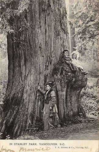 Stanley Park Vancouver (Mary Evans / Grenville Collins Postcard Collection – Vancouver - Stanley Park - Douglas Fir Tree Kunstdruck (45,72 x 60,96 cm))