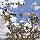 Goats in Trees 2019 Calendar