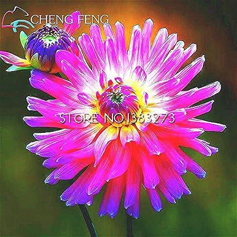 Big vente 200 Graines Gardenia (Cape Jasmine) -DIY jardin en pot Bonsai, l'odeur et de belles fleurs incroyable,