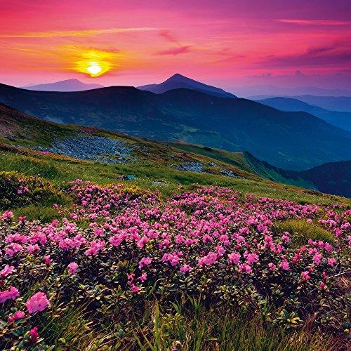 Apple iPhone 4 Housse Étui Silicone Coque Protection Prairie de fleurs Coucher de soleil Soleil couchant Sac Downflip noir