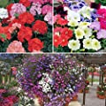 120 plant bedding Bundle - Geranium, Petunia & Lobelia