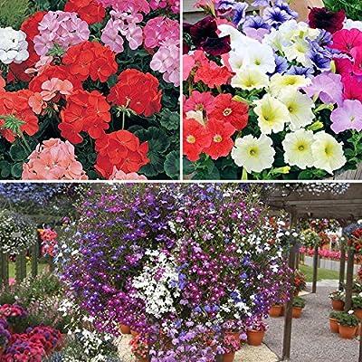 120 plant bedding Bundle - Geranium, Petunia & Lobelia - low-cost UK bedding shop.