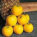 Säulen-Apfel Ananasrenette von Gärtner Pötschke - Du und dein Garten