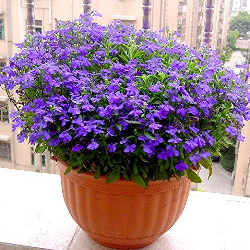 Bleu Fleur de Lin Graine vivace Fleur Graine Quatre Saisons Fleur plantes ornementales tropicales en plein air Bonsai Lin Semilla 100 Pcs 1