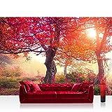 Liwwig - Carta da parati in tessuto non tessuto 400x 280cm Carta da parati con fotografie Foto da parete XXL con alberi, foresta, natura–No. 242