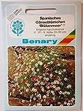 Benary - Spanisches Gänseblümchen