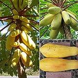 Fruchtsamen Papaya Gelbgold Heirloomsamen Köstliche Süße Einzigartige Samen Sehr RARE Home Garten Dekoration 6 Stück Q02 Versand
