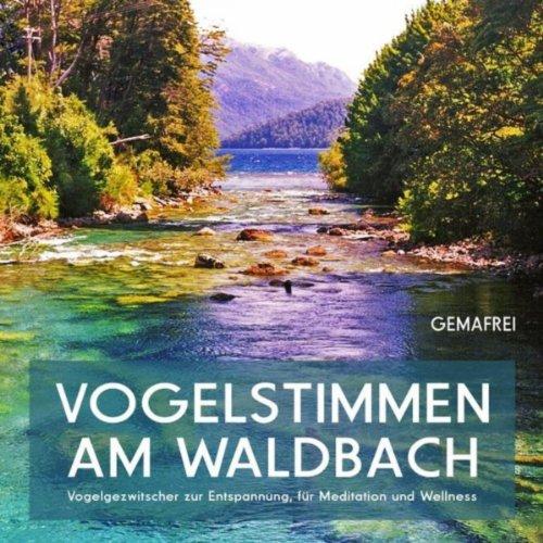 Vogelstimmen am Waldbach - Vog...