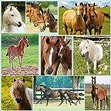Pferdepuzzle - Horses - Puzzle 1000 Teile