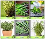 #4: Combo Herb Plant Seeds Rosemary, Asparagus, Mint, Thyme English Winter, Wild Rocket, Garlic Chives Herb Seeds Combo Pack By Creative Farmer