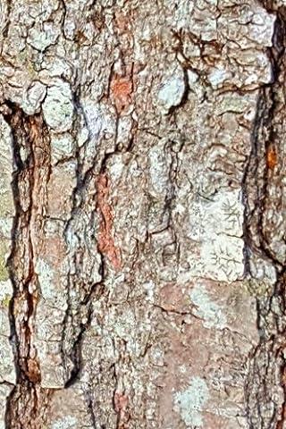 Old Oak Tree Bark Journal: (Notebook, Diary, Blank Book)