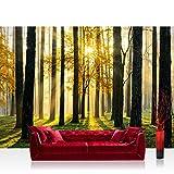 Vlies Fototapete 400x280 cm PREMIUM PLUS Wand Foto Tapete Wand Bild Vliestapete - SUNLIGHT FOREST ll - Wald Bäume Sonnenstrahlen grün grün Ruhe - no. 062