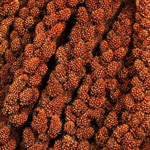 French Millet Red Spray 250gr Parrot Treat