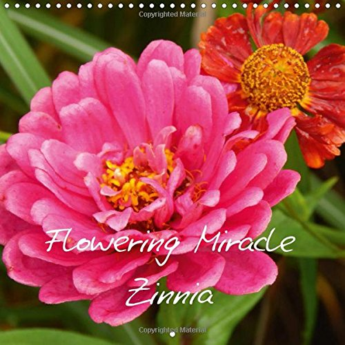 flowering-miracle-zinnia-wall-calendar-2017-300-x-300-mm-square-gorgeous-floral-and-colours-makes-th