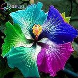 RiesenHibiscus Blumensamen 100 Stück