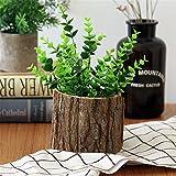 maceta de madera con corteza sauce natural cactus pequeño suculentas macetas de troncos decorativas macetas rústicas