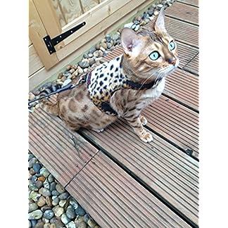 mynwood cat jacket/harness leopard fleece adult cat - escape proof Mynwood Cat Jacket/Harness Leopard Fleece Adult Cat – Escape Proof 61xwOO2w9gL