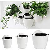 Kentop Lazy, vaso da fiori autoirrigante da parete, per casa, ufficio, giardino Large