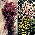 Kletterrosen Kollektion Rosa/Gelb/Rot - 3 rosen von Meingartenshop - Du und dein Garten