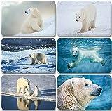Merchandise for Fans Eisbär/Eisbären in der Arktis - 6 rechteckige Kühlschrankmagnete 7 x 4,5 cm - 01 für Memoboard Pinnwand Magnettafel Whiteboard