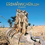 Erdmännchen 2019: Broschürenkalender mit Ferienterminen. Lustige Bilder der witzigen kleinen Tiere. 30 x 30 cm