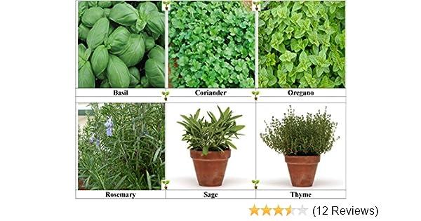 Economy Free p/&p Buy 3 get 1 free! 1000 Seeds Herb Thyme