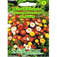 547107  Strohblume Riesenblumige Mischung  Trockenblume   Blumen Saatgut