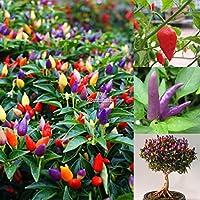 Portal Cool Super picante: 10 / 40Pcs Peter Pepper Chili multicolor decoración Pepper Vegetable Seeds B98B