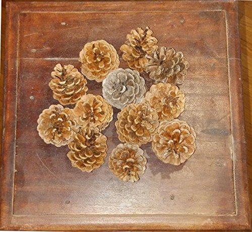 Pommes de pin sylvestre naturelles, 500 grammes