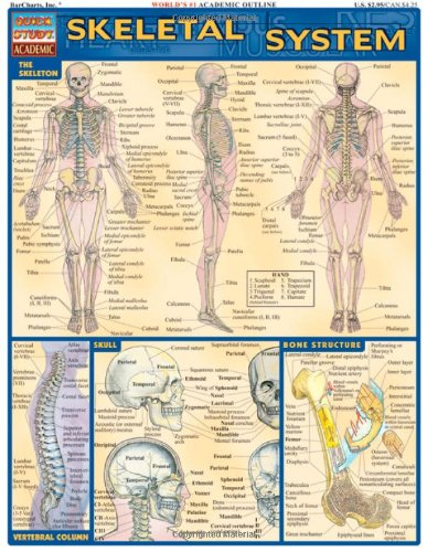 Skeletal System Laminate Reference Chart (Quickstudy: Academic)