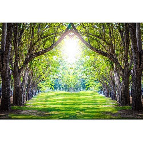 YongFoto 2,2x1,5m poliestere fondali fotografici Viali alberati Grandi vecchi alberi Erba Natura del sole Sfondo foto Studio fotografico nozze Fondale foto Accessori carta da parati