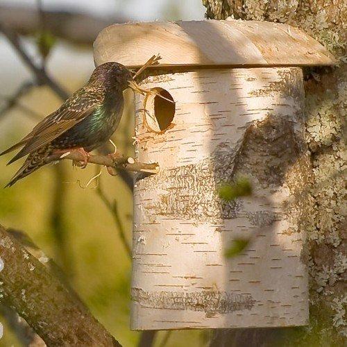 nest4nature Nistkasten aus Birkenholz 30 cm hoch - 2