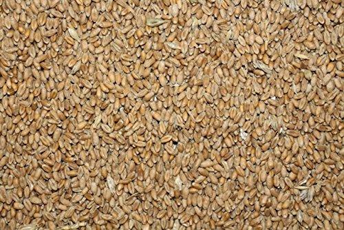 FutterXL 25kg Weizen, direkt vom Landwirt, Ernte 2018