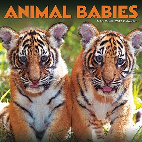 Animal Babies–2017calendario 12x 12en
