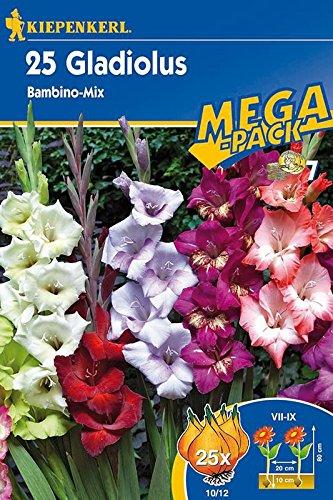 gladbambino-mix-25-st
