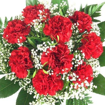 Echte Rote Nelken – Blumen mit Schleierkraut und Schnittgrün als Strauß aufgebunden