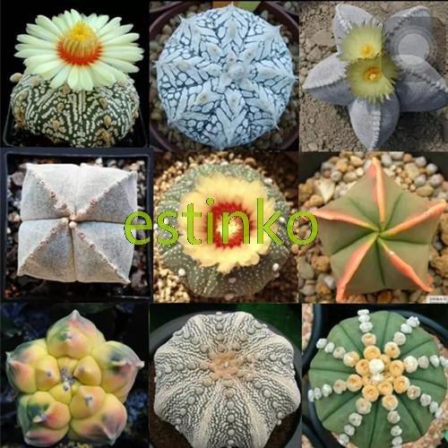 Heiße verkaufen20pcs / lot mischte Astrophytum Kakteensamen Sukkulenten Pflanzen Bonsai sät DIY Hausgarten Topfpflanze Blume
