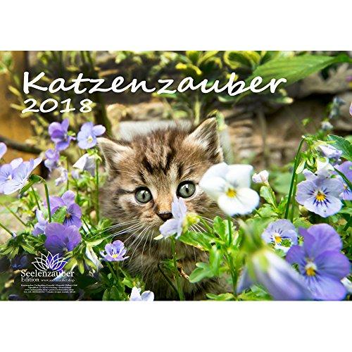 Premium Kalender 2018 · DIN A4 · Katzenzauber · Katzen · Geschenk-Set mit 1 Grußkarte und 1 Weihnachtskarte · Edition Seelenzauber