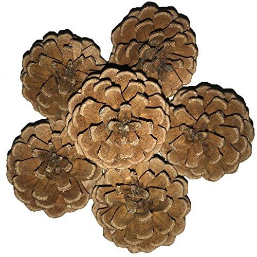 Pinecone, AmaMary 6Pcs Nette natürliche Tannenzapfen entworfen auf Ponderosa Kiefern durch Mutter Natur Groß für Hauptdekoration Hochzeitsfest Blumen Arrangieren Akzente Weihnachtsgeschenk (5-7cm)