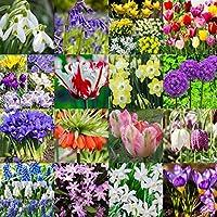 Amazon Fr Bulbes Tulipes Plantes Graines Et Bulbes Jardin