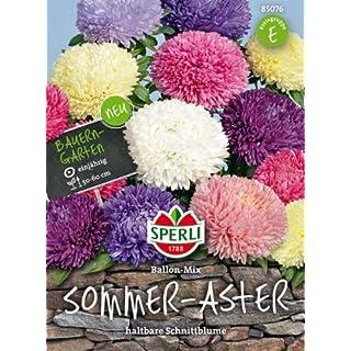 Sperli Sommer-Aster Ballon-Mix