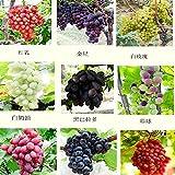 mixtes 30 graines / planter les semis d'arbres fruitiers de graines de semences de fruits de raisin plants en pot de pépins de raisin Kyoho enfant rouge mention