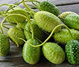 Go Garden West Indian Burr Cornichons, Cucumis anguria de Graines