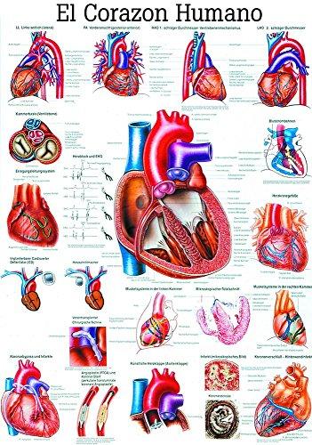 ruediger-lavagna-anatomia-es12-el-corazon-humano-spagnolo-70-cm-x-100-cm-carta